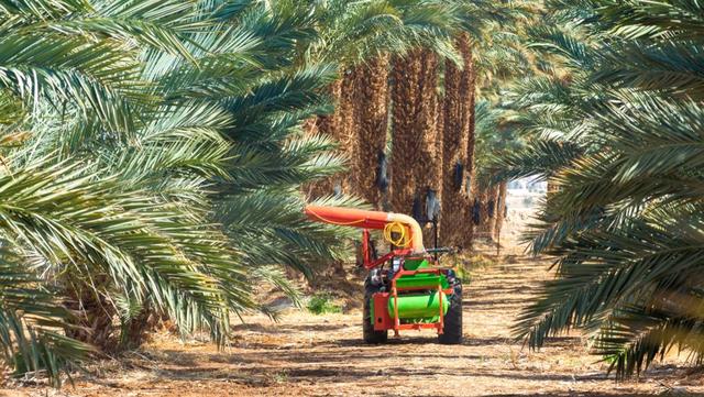 أهم مشاكل زراعة النخيل وإنتاج التمور في الوطن العربي