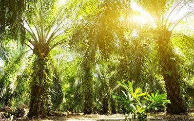 زراعة النخيل في الوطن العربي